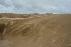 Borsteslaglängder i sanddyerna Arkivbild