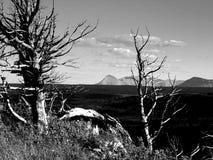 Borstkotten sörjer, skiljelinjeberget Fotografering för Bildbyråer