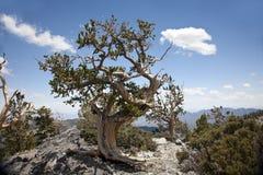 Borstkotten sörjer treen royaltyfri foto
