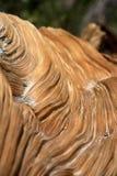 Borstkotten sörjer Treetextur fotografering för bildbyråer