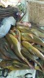 Borta fiske Royaltyfria Foton