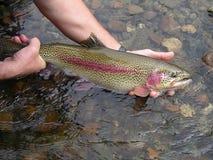 Borta fiske!! Alaska stil royaltyfria bilder