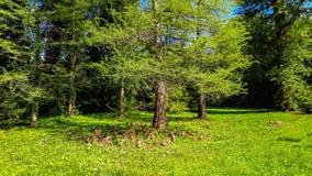 Bortgång för vårvatten till och med det vid liv trädet nära staden av Borovets Tredje ram för Bulgarien Fotografering för Bildbyråer