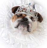 Bortskämd kvinnlig hund royaltyfri bild