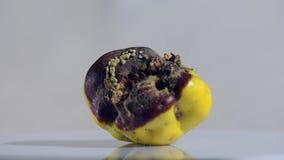 Bortskämd rutten gul äpplekvitten på studion arkivfilmer