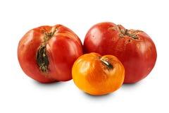 Bortskämda tomater som isoleras på vit bakgrund Arkivbilder