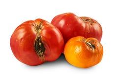 Bortskämda tomater som isoleras på vit bakgrund Royaltyfri Fotografi