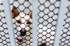 Borttappad hund bak ett staket Arkivfoto