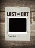 Borttappad katt Arkivbilder
