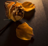 Borttappade kronblad Royaltyfria Foton