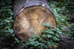 Borttappat träd i högväxt gräs Royaltyfri Foto