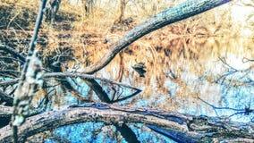 Borttappat vatten Arkivbilder