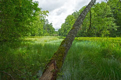 Bory Tucholskie nationalpark i Polen Arkivfoto
