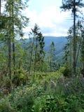 Borzhava Mountain Range of the Ukrainian Carpathians in the Transcarpathian region. Ukraine. Summer 2016 stock image