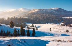Borzhava mountain ridge in winter. Spruce forest on snowy hillside in haze. lovely landscape of Carpathian mountain located in Pylypets village of Ukraine stock photography