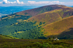 Borzhava ridge in Carpathian mountains in august. Classic late summer travel background in Carpathian alps. Wonderful evening weather with blue sky and some Royalty Free Stock Images