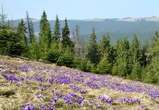 borzhavsky喀尔巴阡山脉的山土坎春天视图 免版税库存照片
