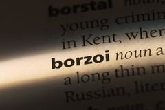 Borzoi. Word in a dictionary.  concept Stock Image