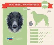 Borzoi Dog breed  infographics. Royalty Free Stock Photography
