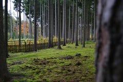 Bos Stock Foto