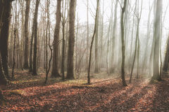 Bos aan het eind van de herfst Royalty-vrije Stock Foto