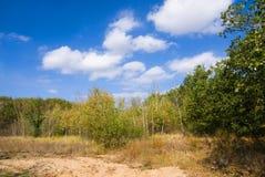 Bos aanplantingen op het zand Royalty-vrije Stock Afbeelding