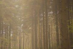Bos achtergrond Royalty-vrije Stock Afbeeldingen
