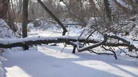 Bos bevroren aardstroom in de sneeuwbovenkanten van bomenlandschap stock video