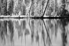 Bos bezinningen in infrared Stock Afbeelding