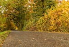 Bos bij de herfst Stock Afbeelding
