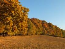 Bos bij de herfst Stock Foto