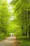 Bos bij de lente Royalty-vrije Stock Afbeelding
