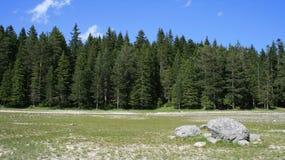 Bos bij de zomer stock afbeelding