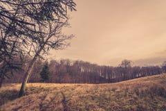 Bos bij een prairie in de herfst Stock Afbeeldingen