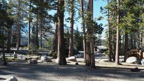Bos bij Meer Tahoe royalty-vrije stock fotografie
