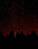 Bos bij nacht Stock Foto