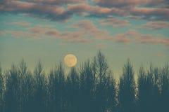 Bos bij schemer en volle maan stock fotografie