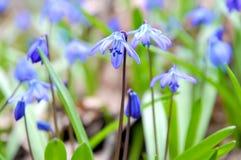 Bos bloemen Stock Fotografie
