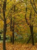 Bos bomen Royalty-vrije Stock Fotografie
