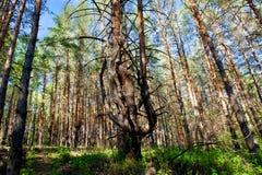Bos, bomen Royalty-vrije Stock Afbeeldingen