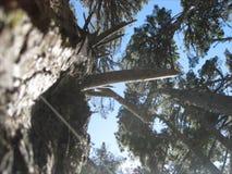 Bos bomen royalty-vrije stock foto