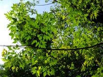Bos bomen Stock Foto's