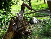 Bos bomen Stock Afbeelding