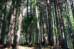 Bos bomen - ecologiehout Royalty-vrije Stock Afbeeldingen