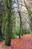 Bos bomen langs de herfst F Royalty-vrije Stock Afbeelding