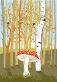 Bos Bomen met Paddestoel Stock Afbeeldingen