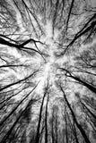 Bos bomen na brand Stock Fotografie