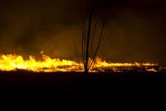 Bos brand bij nacht stock afbeelding