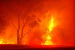 Bos brand in nacht Royalty-vrije Stock Afbeeldingen