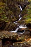 Bos Cascade stock afbeeldingen